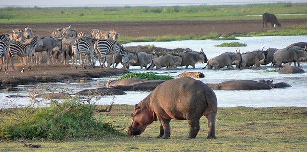 3 days Budget Family Safari Tarangire, Ngorongoro Crater, Lake Manyara