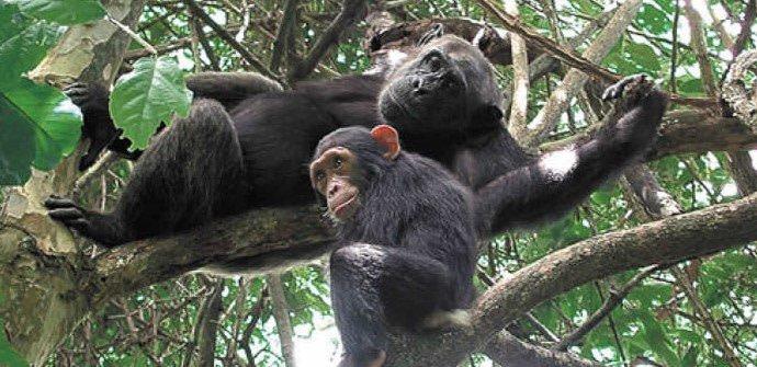 3 days Chimpanzee Trekking Gombe National Park