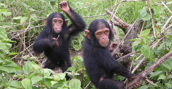 3 Days Chimps Tracking Gombe