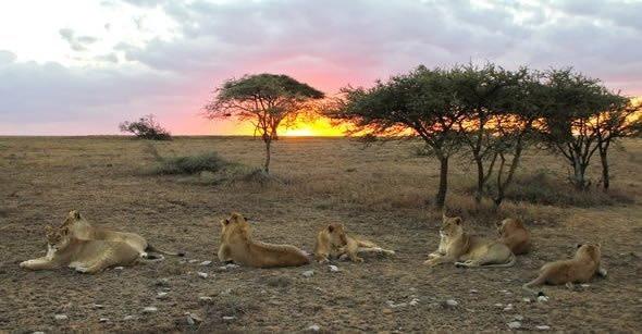3 Days Ruaha Budget Safari