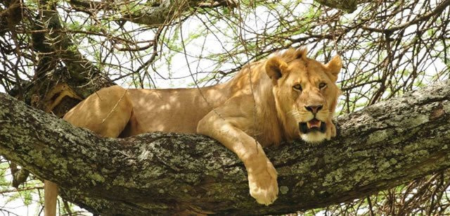 Tanzania Joining Group Safari