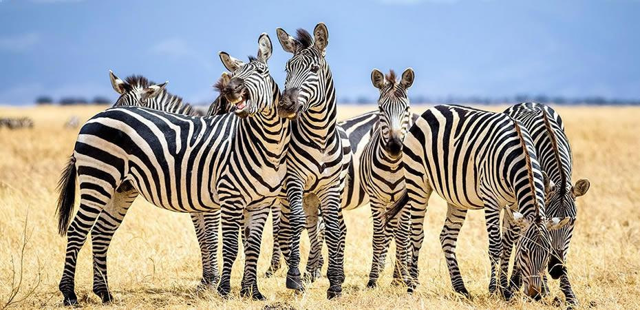 Wilds Of Africa